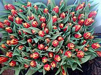 Тюльпаны срез