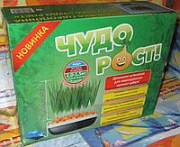 Чудо Рост. Выращивание лука в домашних условиях