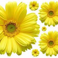 Декор наклейка на стену дверь желтый цветок