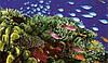 Коралловый Клуб-чем он полезен людям?