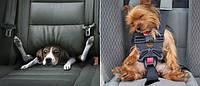 Авто путешествие с собакой