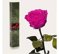 Долгосвежая роза Малиновый Родолит в подарочной упаковке