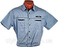 "Рубашка мужская ""Redpolo"". Синяя полоска. Короткий рукав"