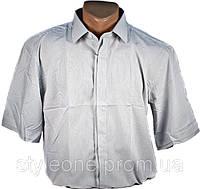 "Рубашка мужская ""Enriko"". Короткий рукав. Белая"