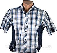 Рубашка мужская. Синяя клетка. Короткий рукав