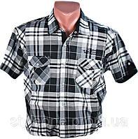 Рубашка мужская. Черная клетка. Короткий рукав