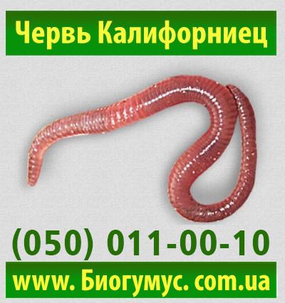 где купить червей на рыбалку в нижнем новгороде