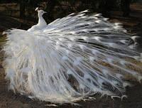 Набор алмазной вышивки Птица счастья