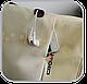"Молодежный рюкзак для ноутбука 15,6"" Crown Harmony Series, BPH3315WR кремовый (белый), фото 8"