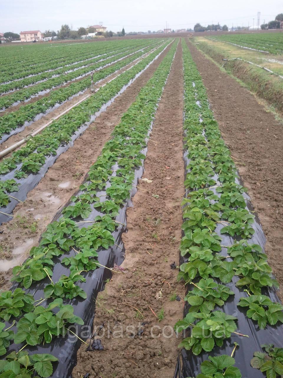 Как посадить помидоры под пленку 48