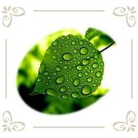 Удобрения для листовой подкормки