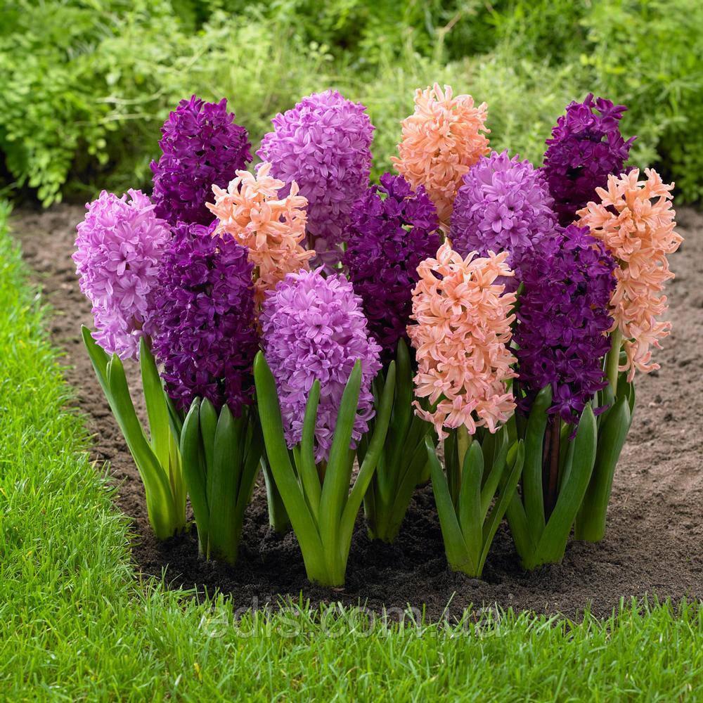 Геоциния цветы фото уход