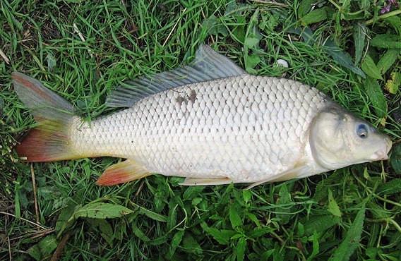 прикормка для рыбы купить в китае
