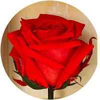 Долгосвежая роза Алый Рубин 7 карат