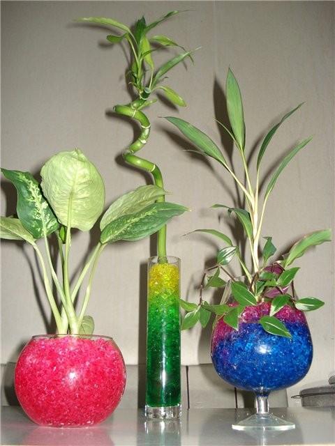 Какие растения сажать в гидрогель 90