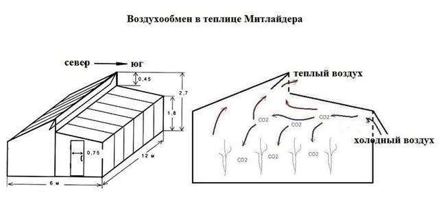 Строительство теплицы митлайдера своими руками