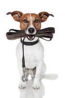 Поводки, шлеи для собак и котов