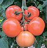 Семена томата Лилос F1 1000 семян Rijk Zwaan