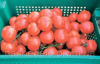 Семена томата Логур F1 100 семян Rijk Zwaan