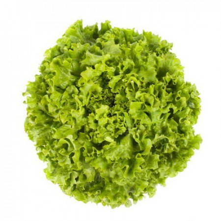 Семена салата Отилия  \ Othilie 1000 семян тип Батавия  Rijk Zwaan