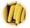 Кукуруза початок замороженная ( 1 кг )