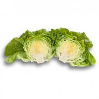 Салат маслянистый головчатый Джиска \ Jiska RZ 5000 семян Rijk Zwaan