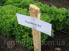 Семена слата Экспедишн \ Expidition RZ 1000 семян Rijk Zwaan