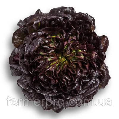Насіння салату Клі \ Klee RZ 1000 насінин Rijk Zwaan