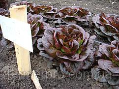 Семена салата Гоген \ Gaugin RZ 1000 семян Rijk Zwaan