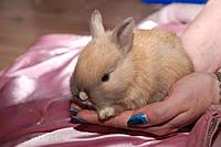 Кролики ко дню Святого Николая