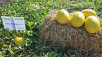 Семена дыни Бабор F1 \ Babor Clause 1000 семян