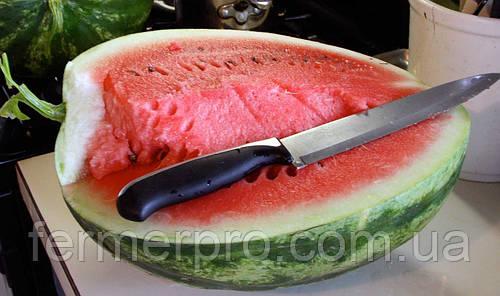 Семена арбуза  Кримсон Свит \ Crimson Sweet 10 кг  Clause
