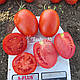 Семена томата Дино F1 \ Dino F1 1000 семян Clause , фото 2