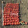 Семена томата Дино F1 \ Dino F1 1000 семян Clause