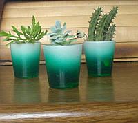 Подарунковий набір із трьох рослин