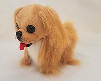 "Собака ""Пекинес на батарейках"" RMT-TV-MKX-3710 (размер-25см)"