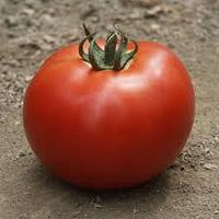 Семена помидора Мирсини F1 1000  семян детерминантный