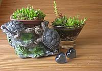 Подарунок із живих рослин