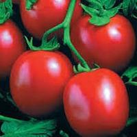 Семена помидора Перфектпил F1 1000  семян детерминантный