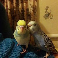 Передержка вашего попугая