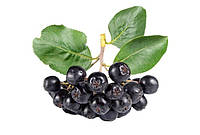 Паста арониевая LiQberry 550 г