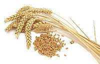Пшеница озимая Ружичи 500 г