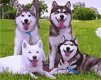 Картина по номерам BK-GX3842 Собаки на лужайке (40 х 50 см) Brushme