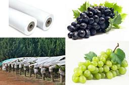 Агроволокно для винограду