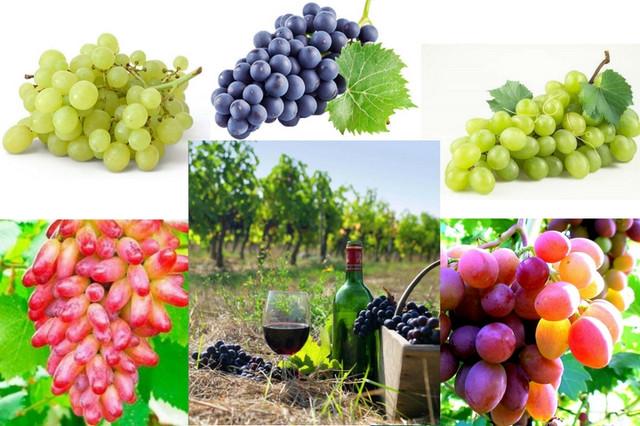 агроволокно купить киев для винограда