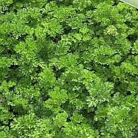 Семена петрушки кучерявой Изумруд