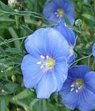 Льон Синій шовк 0,3 г, фото 3