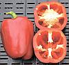 Семена перца сладкого Сондела F1 1000 семян Rijk Zwaan