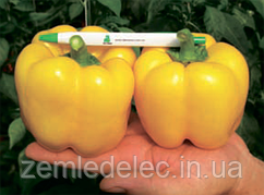 Семена перца сладкого Бачата F1 1000 семян Rijk Zwaan