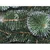 Сосна зеленая с белыми кончиками 1,50 м, фото 2